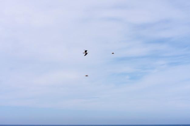 Mouettes volant