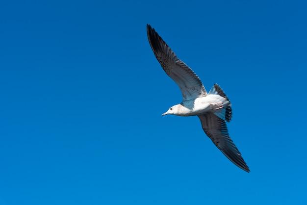Les mouettes volent dans le beau ciel bleu