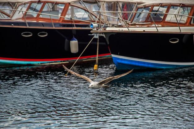 Les mouettes volent et mangent sur la jetée d'istanbul.