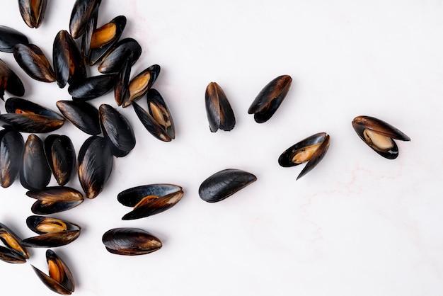 Moules méditerranéennes éparses à plat