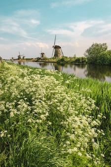 Moulins à vent hollandais traditionnels avec de l'herbe verte au premier plan, les pays-bas