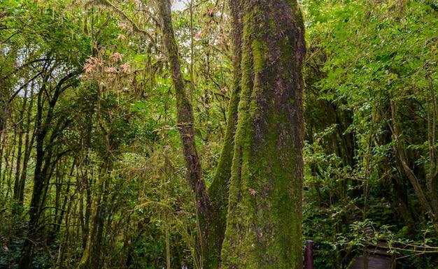 Mousse sur l'arbre dans le sentier de la nature d'ang ka luang