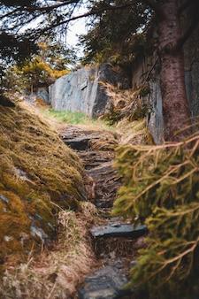 Mousse brune et verte sur journal d'arbre