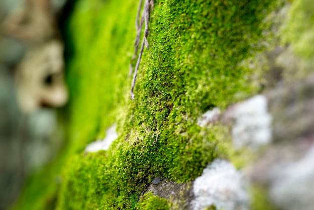 Mousse sur un fond d'arbre