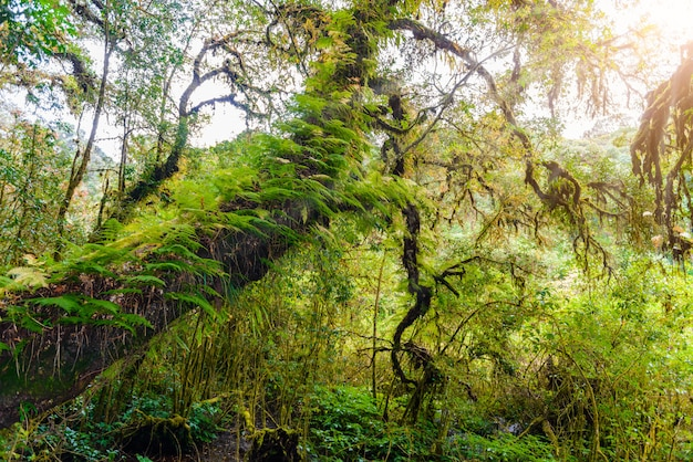 Mousse, fougère dans le sentier de la nature d'ang ka luang