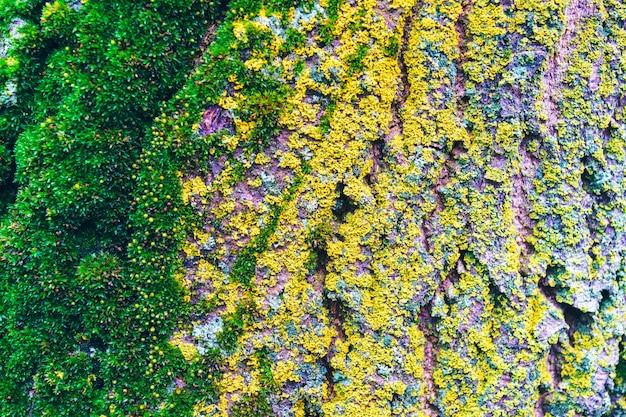 Mousse de lichen et champignon poussant sur l'écorce d'un arbre en forêt.