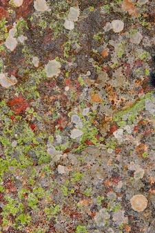 Mousse de lichen dans la texture de roche calcaire en espagne