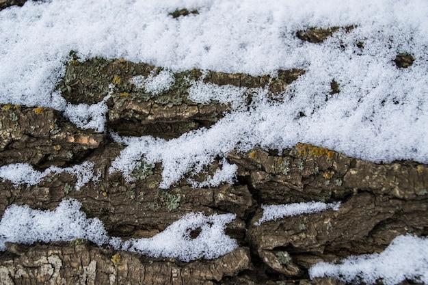 Mousse et lichen multicolores sur le chêne en bois de tronc d'écorce