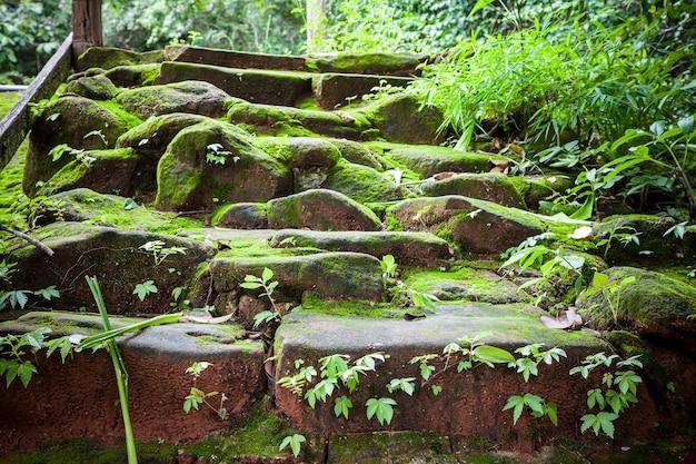 Mousse et mauvaises herbes sur l'escalier de roche.