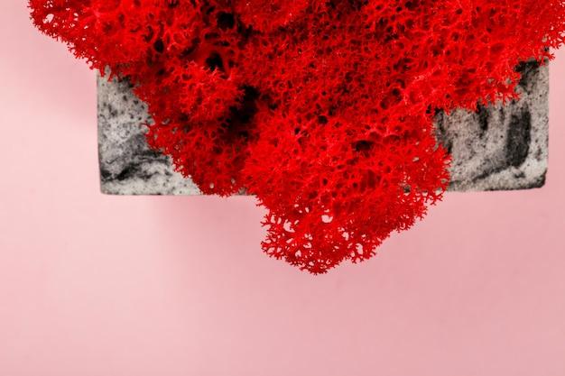 Mousse naturelle stabilisée rouge. fleur en pot