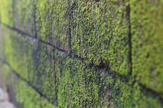 Mousse par le mur se concentrer au milieu