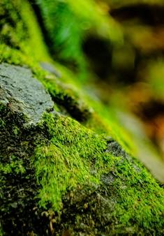 Mousse sur pierre