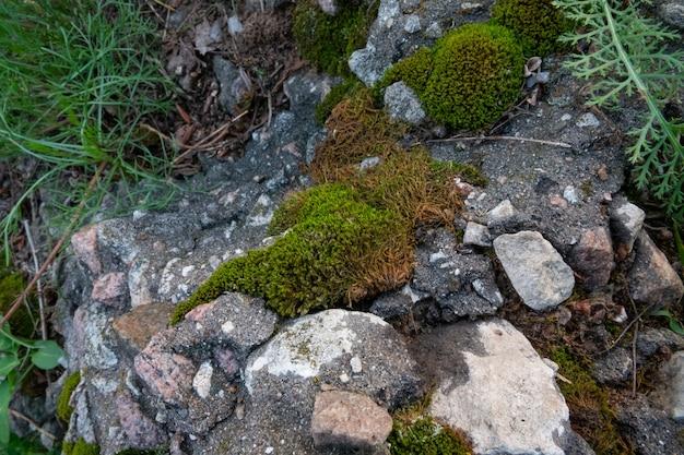 Mousse sur les pierres pierres sur l'herbe verte de la rue fond de pierres