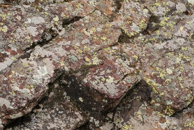 Mousse sur un rocher dans les montagnes, gros plan