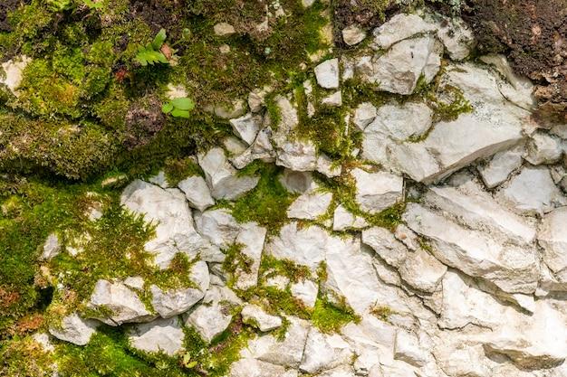 Mousse sur le schiste des rochers, milieux naturels.