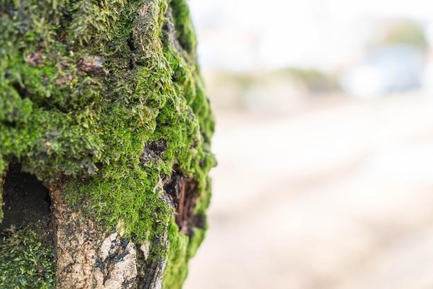 Mousse sur le tronc de l'arbre