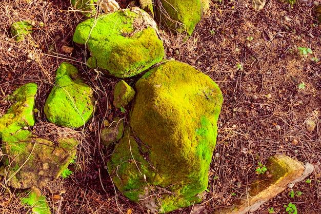 La mousse verte brillante qui a grandi couvre les pierres brutes