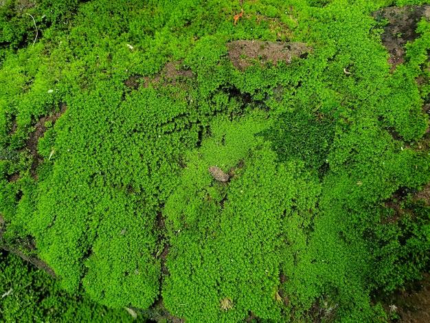 Mousse verte couverte sur la pierre