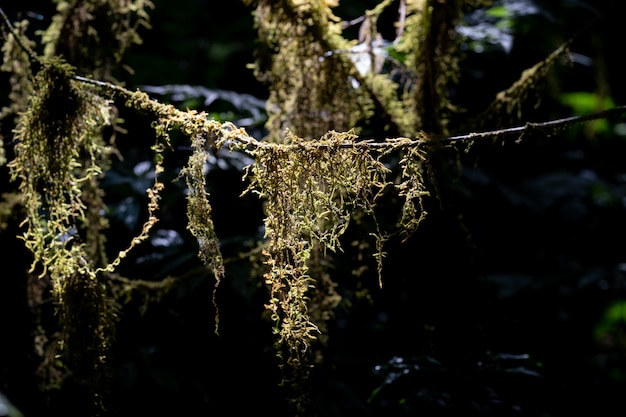 Mousse verte dans la forêt, envahie par les troncs