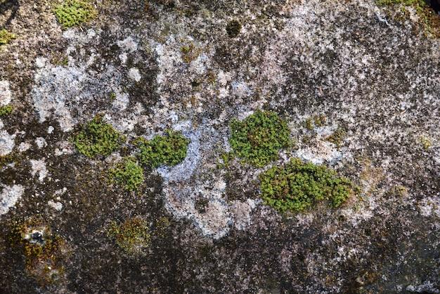 Mousse verte dans la nature