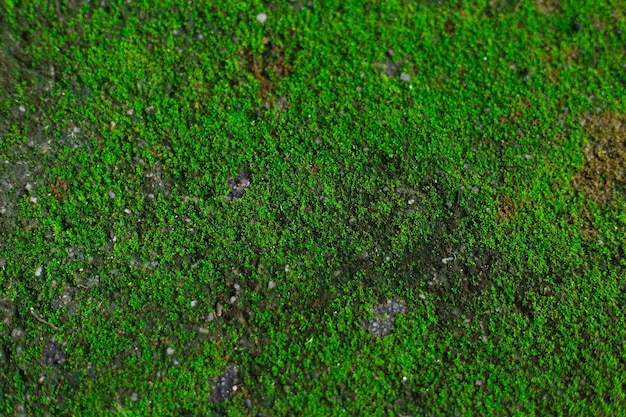 La mousse verte et fraîche pousse sur le rocher dans un thème de fond naturel