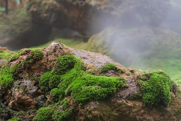 Mousse verte grandissant sur un rocher avec brouillard