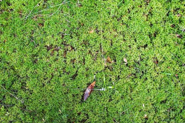Mousse verte lumineuse dans la forêt de la flore forestière des terres dans la forêt vue d'en haut