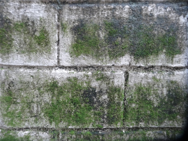 Mousse verte sur le mur