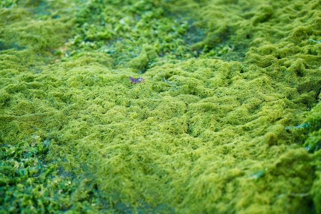 Mousse verte sur le terrain
