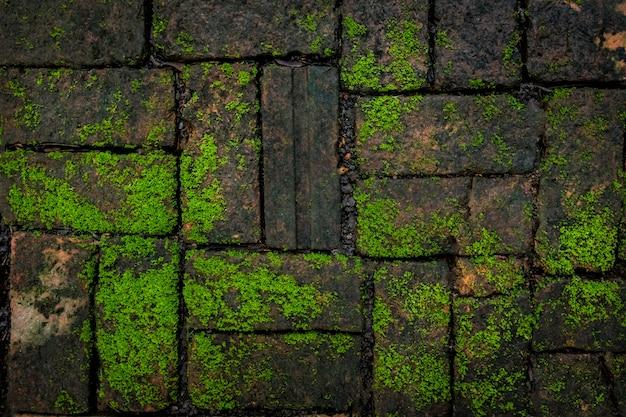 Mousse verte et texture de fond de brique belle dans la nature.