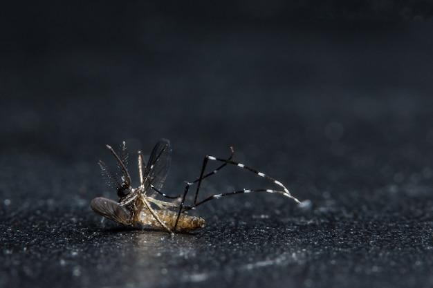 Les moustiques macros meurent