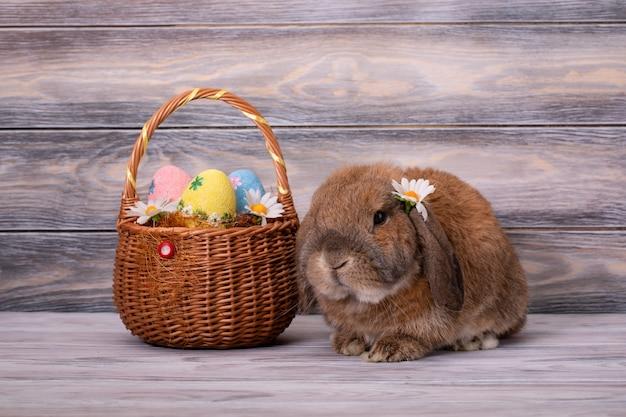 Le mouton nain de race lapin se trouve avec une fleur de marguerite derrière l'oreille. panier avec des oeufs de pâques.