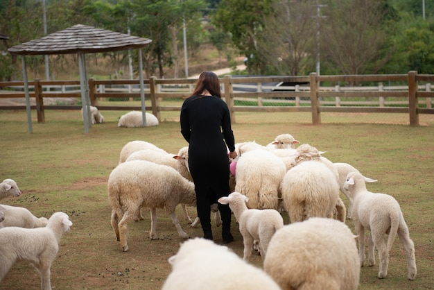 Des moutons à la ferme et des yeux de pitié