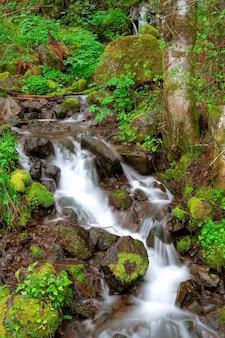 Mouvement flou coup de ruisseau qui coule sur les roches couvertes de mousse verte dans la forêt lointaine