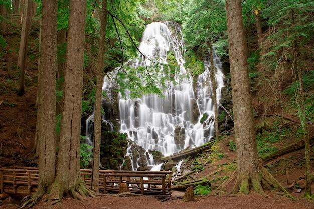 Mouvement flou de ruisseau et de cascades dans une région boisée isolée avec une passerelle au premier plan