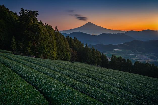 Mt. fuji avec champ de thé vert au lever du soleil à shizuoka, au japon.