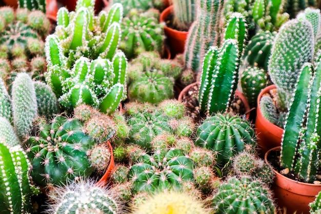Multi de cactus sur le pot de terre mis sur le terrarium pour la décoration et l'intérieur