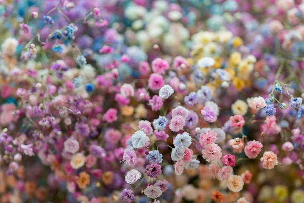 Multicolores petites belles fleurs décoratives.