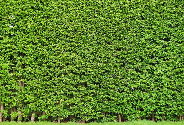 Mur d'arbre