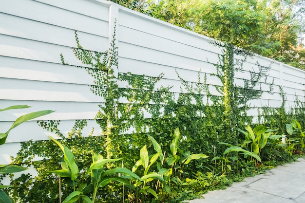 Mur blanc avec feuille d'arbre sur le mur