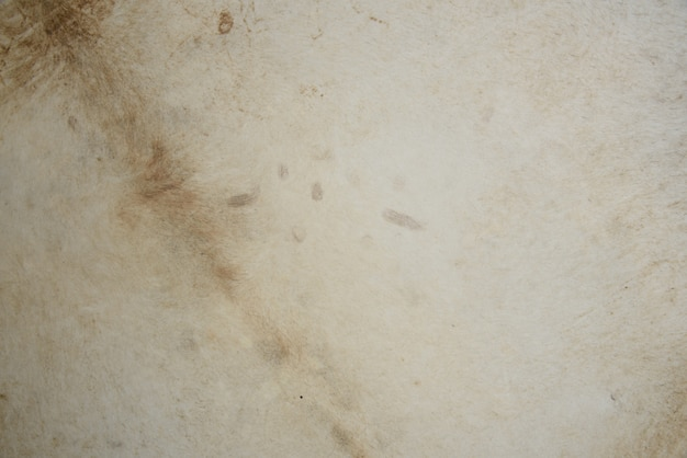 Mur blanc de peau de vache