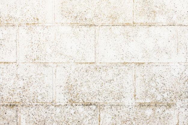 Mur de briques d'aspect rugueux