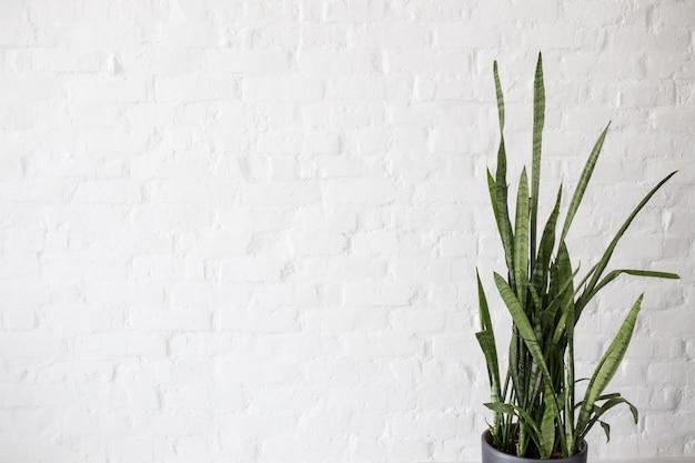 Mur de briques blanches avec une fleur verte. espace pour une inscription.
