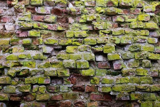 Mur de briques rouges vintage recouvert de mousse verte