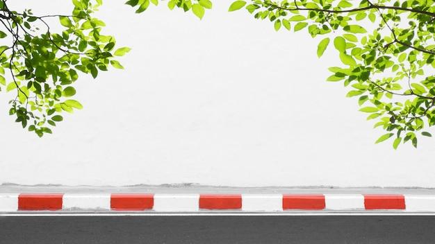 Mur de ciment blanc avec une branche d'arbre et des feuilles