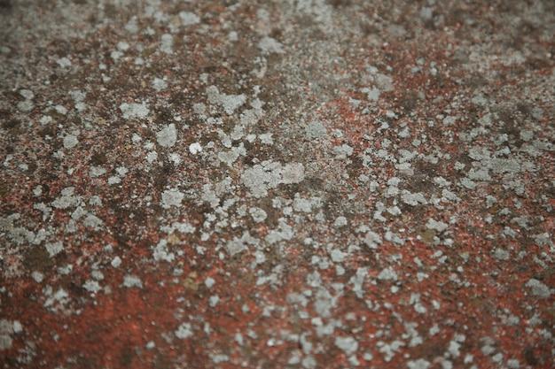 Mur de ciment de couleur rouge avec moisissure, texture ancienne avec champignon.