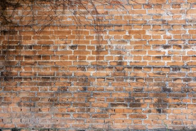 Le mur est en brique puis peint en blanc. il y a des lianes sur le mur de gauche.