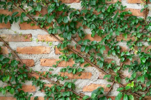 Le mur est en brique puis peint en blanc. il y a des lianes