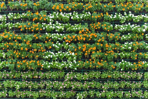 Mur de fleurs vertical jardin