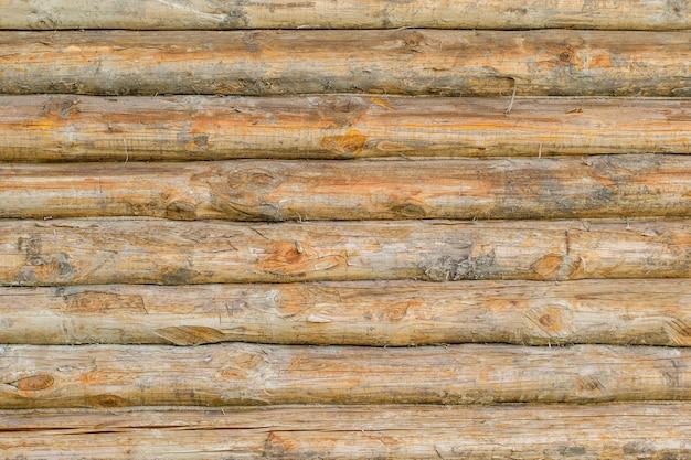 Mur de fond d'un grand nombre d'arbres entiers.